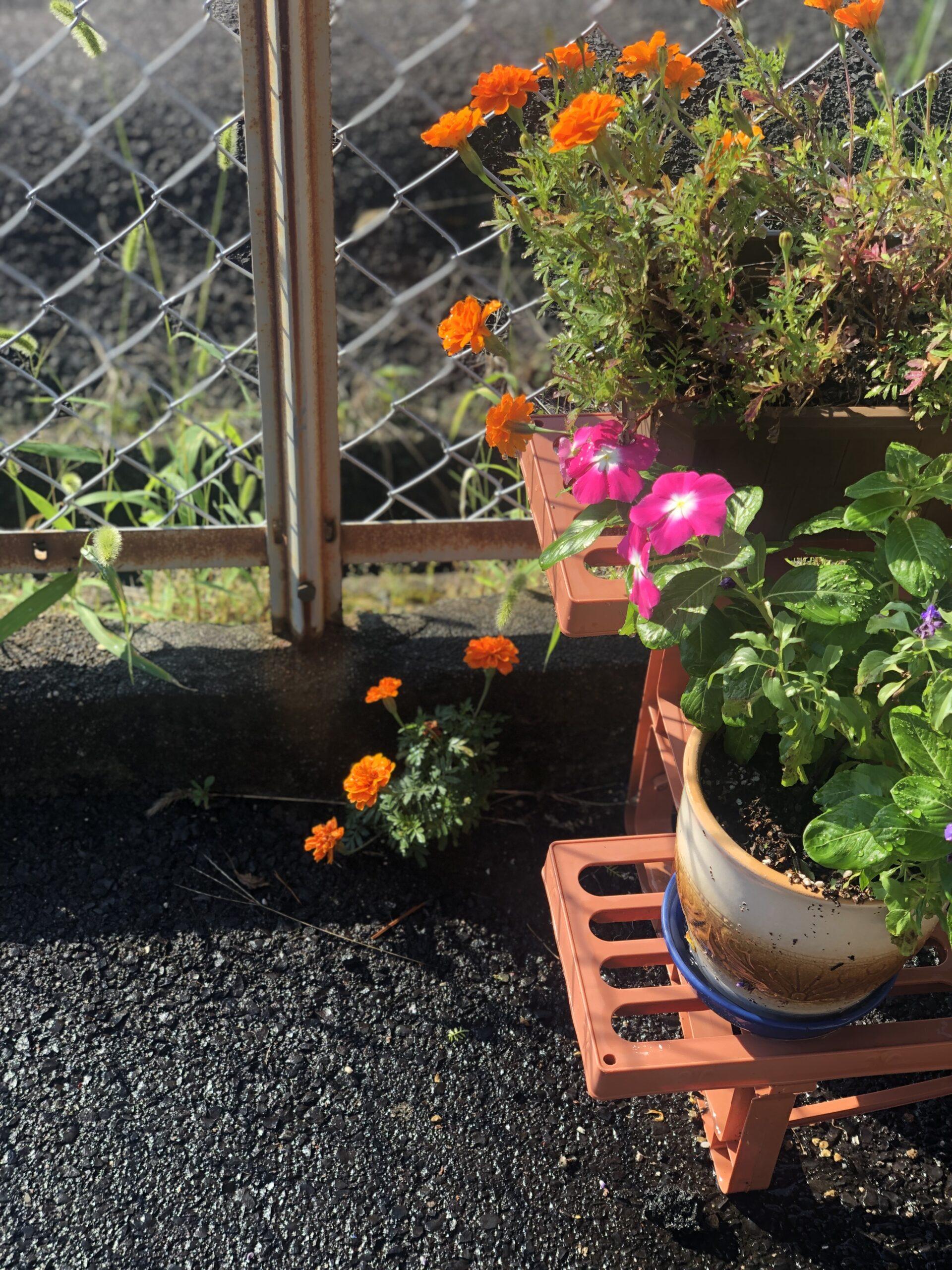 花の生命力