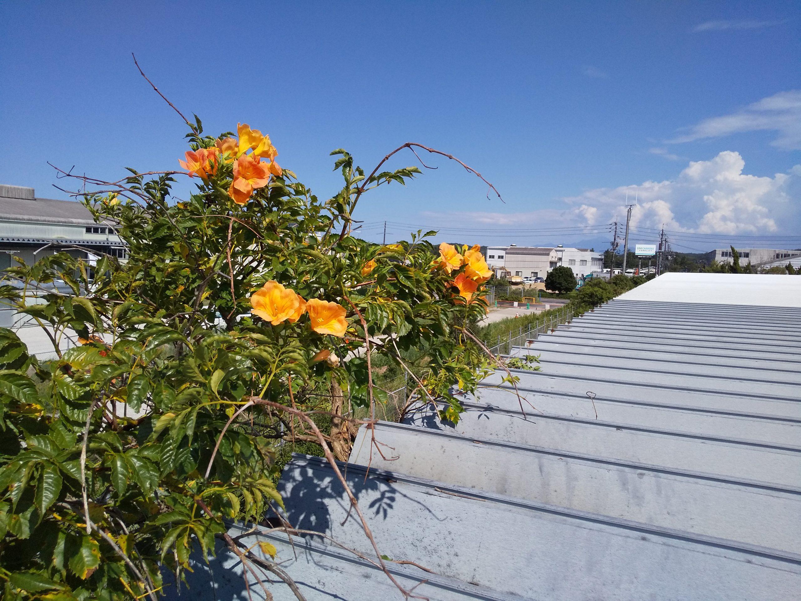 屋根の上の・・・